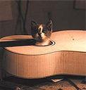 ギターに入った猫